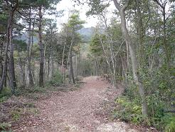 NO3赤松の道.JPG